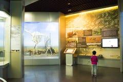 Asiat Kina, Peking, Pekingmuseum av naturhistoria Arkivbilder