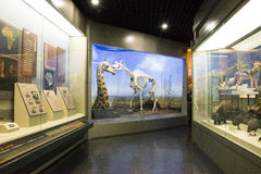 Asiat Kina, Peking, Pekingmuseum av naturhistoria Royaltyfri Fotografi