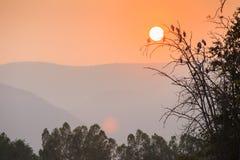 Asiat Openbill-Storch, der auf dem Baum am Sonnenniederwerfen erfasst lizenzfreie stockfotografie