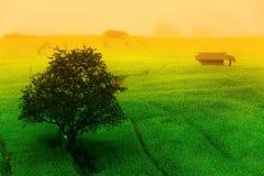 Asiat tritt Reisfeld Stockbild