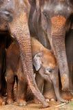 asiatet behandla som ett barn elefanten Fotografering för Bildbyråer