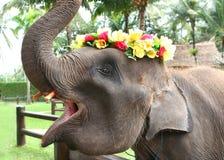 asiatet behandla som ett barn elefanten Arkivbilder