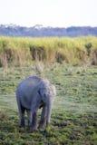 asiatet behandla som ett barn elefanten Royaltyfri Foto