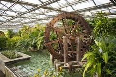 Asiatet Kina, storslagen siktsträdgård för Peking blommar, växthuset royaltyfri foto
