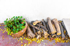 Asiatic Pennywort pot and log wood Stock Images