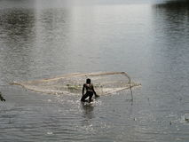 Asiatic rybak Zdjęcie Stock