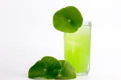 Asiatic wąkroty zielarski sok odizolowywający na białym, zdrowym karmowym agai, Obraz Stock