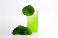 Asiatic wąkroty zielarski sok odizolowywający na białym, zdrowym karmowym agai, Zdjęcie Royalty Free