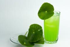 Asiatic wąkroty zielarski sok odizolowywający na białym, zdrowym karmowym agai, Fotografia Stock