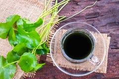 Asiatic wodny ziołowy fotografia stock