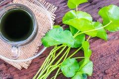 Asiatic wodny ziołowy zdjęcie royalty free