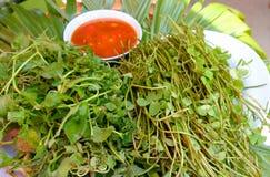 asiatica的Centella和菜 库存照片