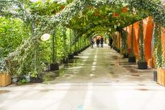 Asiatico carnevale di Cina, Pechino, agricoltura, coltivazione della serra Immagini Stock Libere da Diritti