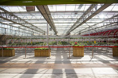Asiatico carnevale di Cina, Pechino, agricoltura, coltivazione della serra Immagine Stock Libera da Diritti