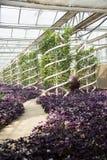 Asiatico Cina, Pechino, carnevale di agricoltura, coltivazione della serra Immagini Stock Libere da Diritti