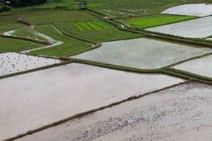Asiatico del giacimento del riso Fotografia Stock Libera da Diritti