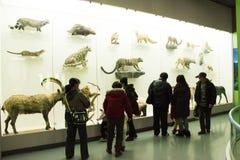 Asiatico museo di Cina, Pechino, Pechino di storia naturale Immagine Stock