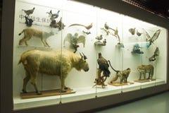 Asiatico museo di Cina, Pechino, Pechino di storia naturale Fotografia Stock Libera da Diritti