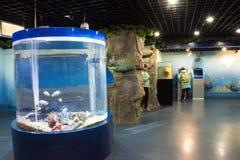 Asiatico museo di Cina, Pechino, Pechino di storia naturale Immagini Stock