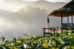 Asiatin, die Vietnam-Kultur traditionell auf dem Gebiet des grünen Tees auf Doi Ang Khang, Chiang Mai, Thailand trägt stockfotografie