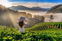 Asiatin, die Vietnam-Kultur traditionell im Erdbeergarten auf Doi Ang Khang, Chiang Mai, Thailand trägt stockfotografie