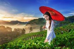 Asiatin, die Vietnam-Kultur traditionell im Erdbeergarten auf Doi Ang Khang, Chiang Mai, Thailand trägt lizenzfreies stockfoto