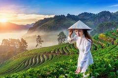 Asiatin, die Vietnam-Kultur traditionell im Erdbeergarten bei Sonnenaufgang trägt lizenzfreie stockfotografie