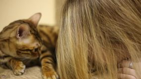 Asiatinmädchen, das mit einer braunen Katze verwöhnt Erregt ein Spiel stock video footage