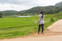 Asiatinnen am grünen terassenförmig angelegten Reisfeld, Mae Klang Luang Chiang-MAI Stockfotografie