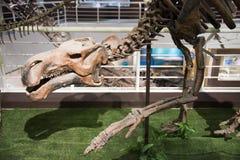Asiatique Chine, Pékin, musée de hall d'exposition antique de ŒIndoor de ¼ d'animalï, Photo stock
