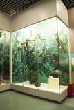Asiatique Chine, Pékin, musée de Pékin d'histoire naturelle Photos stock