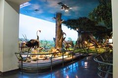 Asiatique Chine, Pékin, musée de Pékin d'histoire naturelle Image libre de droits