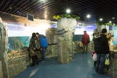 Asiatique Chine, Pékin, musée de Pékin d'histoire naturelle Images libres de droits