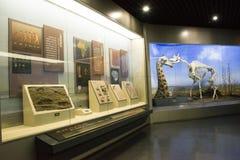 Asiatique Chine, Pékin, musée de Pékin d'histoire naturelle Photos libres de droits