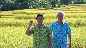 Asiatische ältere Videopaare, die entlang Reisfeld gehen und schauen Betrachten des Natur- und Landwirtschaftsgeschäfts stock footage
