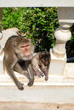 Asiatische Affefamilie, die auf Treppe sitzt Stockbilder