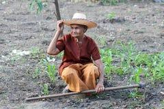 Asiatische alte Landwirte im Gemüsegarten Lizenzfreie Stockfotos