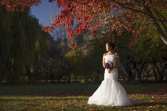 Asiatische chinesische Braut im Hochzeitskleid in der Natur Lizenzfreies Stockbild