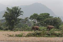 Asiatische Elefanten durch den Fluss in Thailand stockfotos