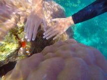 Asiatische Fahrer ` s Hände sind aus Seeanemonen heraus zum Meer hervorragend stockfotos