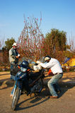Asiatische Kultur, Pfirsichblüte, vietnamesischer Blumentopf lizenzfreies stockfoto