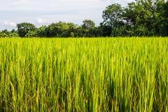 Asiatische Landschaft mit ricefield Lizenzfreies Stockbild