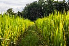 Asiatische Landschaft mit ricefield Stockfotos
