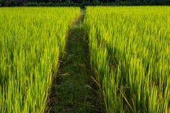 Asiatische Landschaft mit ricefield Lizenzfreie Stockfotografie
