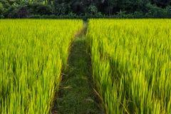 Asiatische Landschaft mit ricefield Lizenzfreies Stockfoto