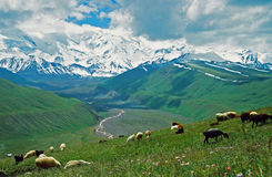 Asiatische Landschaft - Steppe, Schaf und Pamir-Berge Lizenzfreies Stockfoto