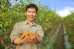 Asiatische Landwirtholdingtomate Lizenzfreie Stockfotografie