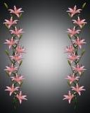 Asiatische Lilie blüht Rand Stockfoto