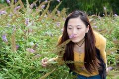 Asiatische Ostfrau, die über Sammelnblumen verbiegt Stockbild