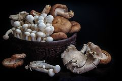 Asiatische Pilze Stockbilder